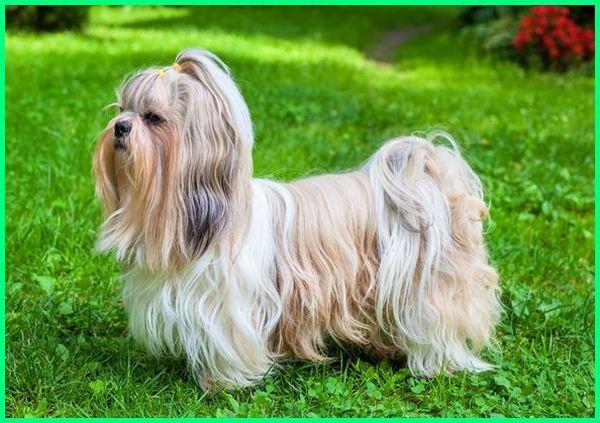 anjing ukuran kecil dan lucu, foto anjing kecil yang lucu, foto anjing kecil yg lucu, gambar anjing kecil yang lucu, jenis2 anjing kecil lucu, jenis anjing kecil yang lucu, nama anjing kecil yang lucu