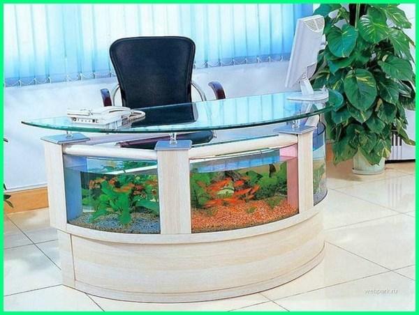 aquarium meja unik, aquarium unik dan aneh di kantor, aquascape aquarium unik, aquarium unik kecil, aquarium unik buatan sendiri, akuarium bentuk unik, akuarium berbentuk unik