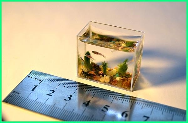 akuarium unik kecil, aquarium unik kecil