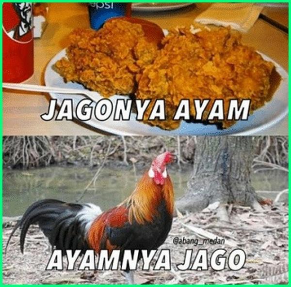 ayam kfc lucu, Ayam KFC yang lucu, meme ayam KFC, meme ayam CFC
