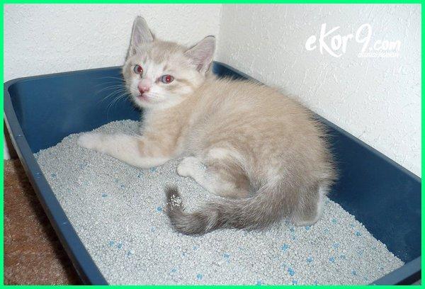 apa yang menyebabkan kucing mencret, apakah kucing mencret boleh dimandikan, apakah kucing mencret bisa mati, kenapa kucing mencret, kenapa kucing mencret berdarah, kenapa kucing mencret darah, kenapa kucing mencret berlendir, kenapa kucing mencret ada darahnya, kenapa kucing mencret air, apakah kucing mencret bisa sembuh sendiri
