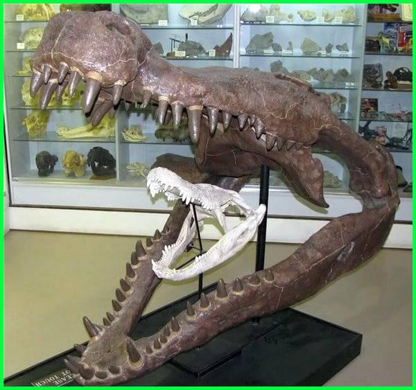 buaya terbesar di bumi, hewan terbesar yang pernah ada, hewan terbesar yang pernah ditemukan, hewan laut terbesar yang pernah ada, hewan laut terbesar yang pernah hidup, foto hewan terbesar yang pernah ada, hewan purba terbesar yang pernah ada di bumi, hewan purba terbesar yang pernah ditemukan, foto hewan terbesar yang pernah ditemukan