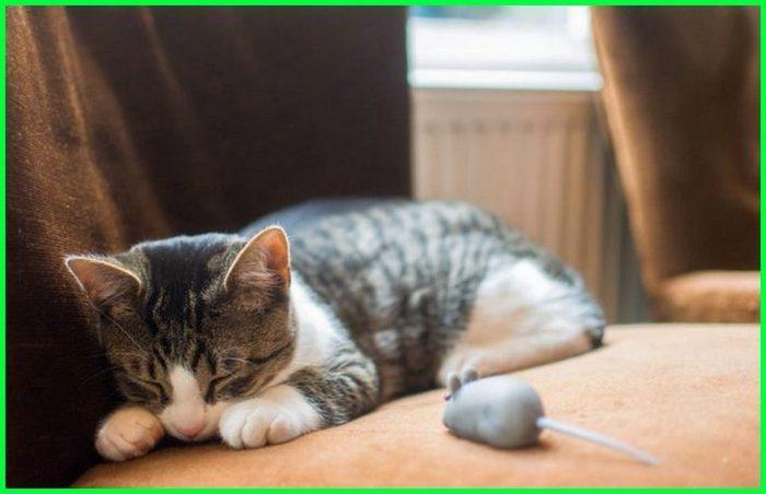 kucing cacingan apa obatnya, kucing anggora cacingan, kucing ada cacing putih, obat kucing cacingan alami, kucing bisa cacingan, kucing berak cacing, kucing berak cacing putih, ciri kucing cacingan dan cara mengobatinya, mengobati kucing cacingan dengan bahan alami, kucing eek cacing