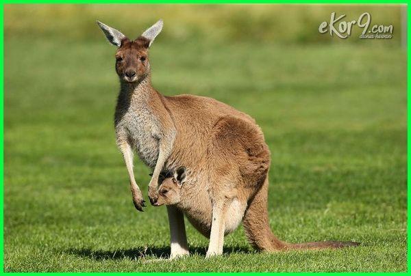Lengkap Contoh Hewan Vertebrata Dan Invertebrata Dunia Fauna Hewan Binatang Tumbuhan Dunia Fauna Hewan Binatang Tumbuhan