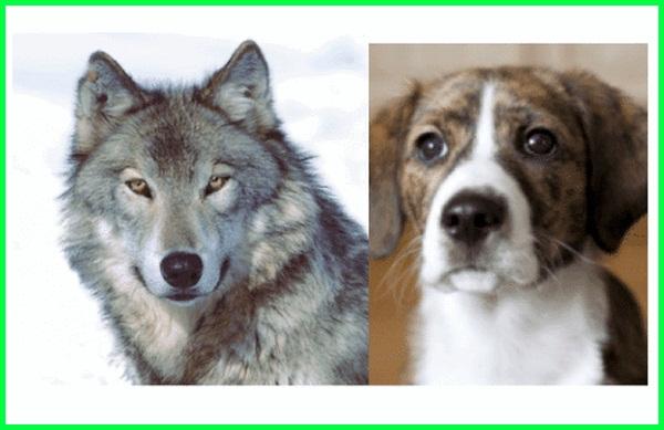 domestikasi artinya, domestikasi anjing.pdf, cara domestikasi hewan, contoh domestikasi biologi, domestikasi dan contohnya, faktor domestikasi, faktor domestikasi adalah, gambar domestikasi, jurnal domestikasi hewan, domestikasi merupakan, domestikasi maksudnya, domestikasi makna