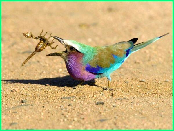 gambar burung keren, foto burung keren, gambar burung warna warni, gambar burung banyak warna, burung aneka warna
