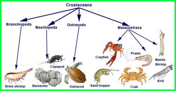 apa saja hewan yang hidup di air,hewan apa saja yg ada di air payau, hewan apa saja yang hidup di air payau, hewan apa yang hidup di air payau, hewan di air payau