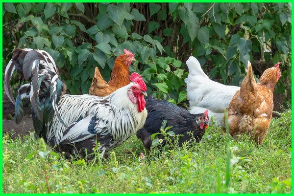 hewan apa saja yg ada di kebun, hewan di kebun binatang, gambar hewan di kebun