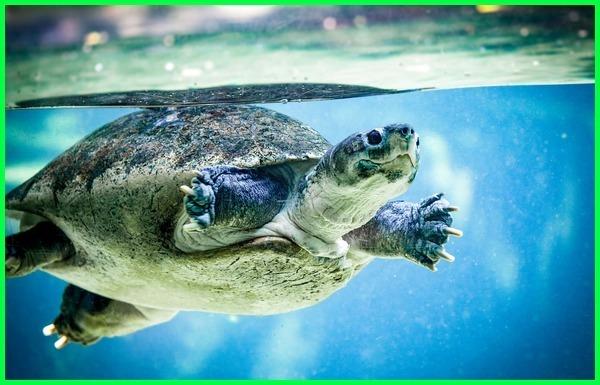 hewan di air dan darat,hewan hidup di air darat, hewan air darat, hewan yang hidup di air tawar adalah, hewan yang hidup di air dan darat adalah, hewan yg dapat hidup didarat dan diair adalah, hewan apa hidup diair dan didarat, hewan yang hidup didarat dan diair beserta ciri-cirinya