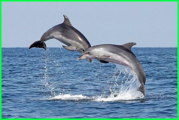 hewan di air laut, hewan di air asin, hewan hidup di air, hewan air adalah, contoh hewan di air laut, hewan air dan ciri-cirinya, hewan ekosistem air laut