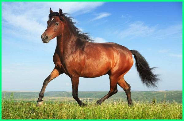 hewan serta manfaat bagi manusia, manfaat kuda bagi manusia, apa saja manfaat hewan bagi manusia, apa manfaat hewan manusia, apa manfaat hewan bagi manusia, apa manfaat hewan bagi manusia dan lingkungan, apa manfaat hewan bagi manusia brainly, apa manfaat hewan kerang bagi manusia, apa manfaat hewan ternak bagi manusia, apakah manfaat hewan bagi manusia, apakah manfaat hewan ternak bagi manusia, apakah manfaat hewan dan tumbuhan bagi manusia, nama hewan dan manfaat bagi manusia, apa manfaat hewan untuk manusia