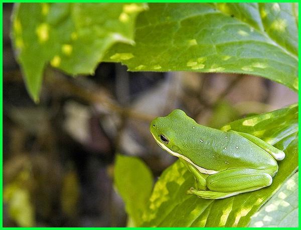hewan yang ada di ekosistem kebun, hewan yang ada di kebun, hewan yg biasanya ada di kebun