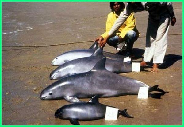 hewan yang baru punah, hewan laut yang baru saja punah, ikan yang baru punah, hewan yang punah baru baru ini