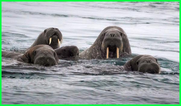 hewan yang hidup di air contohnya, contoh hewan di air laut, hewan air dan ciri-cirinya, hewan ekosistem air laut hewan air ganas, hewan air gambar, hewan ganas di air, hewan yang hidup di air selain ikan