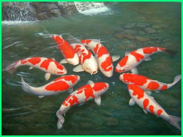 ikan koi feng shui, kolam ikan feng shui, ikan menurut feng shui, feng shui kolam ikan belakang rumah, feng shui kolam ikan depan rumah, feng shui kolam ikan di rumah, feng shui ikan emas, feng shui ikan hias, feng shui jumlah ikan, feng shui ikan koi, feng shui lukisan ikan koi, feng shui memelihara ikan koi, feng shui pelihara ikan koi