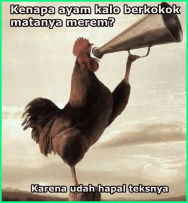 gambar ayam bangkok kata lucu, gambar kata lucu ayam bangkok, ayam berkokok lucu, kata kata lucu tentang ayam bangkok, gambar kata ayam jago lucu, kata kata ayam lucu, gambar kata kata ayam lucu, kata kata lucu ayam bangkok, kata lucu tentang ayam, gambar kata lucu tentang ayam