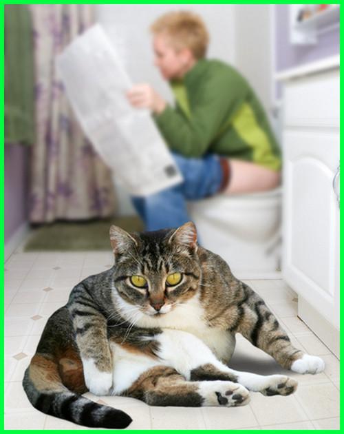 kenapa kucing mengikuti kita kemanapun, kucing mengikuti ke kamar mandi sampai ke wc toilet, kenapa anak kucing mengikuti kita, kenapa kucing kecil mengikuti kita, makna kucing mengikuti kita, mengapa kucing mengikuti kita, alasan kucing mengikuti kita, mengapa kucing selalu mengikuti