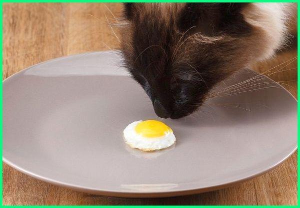 bolehkan kucing memakan telur, makanan yang kucing tak boleh makan, makanan yang tidak boleh dimakan kucing, makanan yang tidak membuat bulu kucing rontok, makanan yang tidak boleh dimakan kucing anggora, makanan yang tidak boleh dikasih kucing, makanan kucing tidak habis, makanan yang tidak boleh kucing makan, makanan yang tidak boleh untuk kucing persia, makanan yang tidak baik untuk kucing