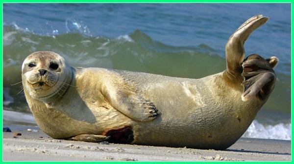 apa contoh hewan mamalia air, apa yang dimaksud mamalia air, apa yang dimaksud dengan mamalia air, apa mamalia yang hidup di air, bagaimana mamalia air bernapas, cara mamalia air mendapatkan oksigen, bagaimana cara mamalia air beradaptasi, nama nama mamalia air
