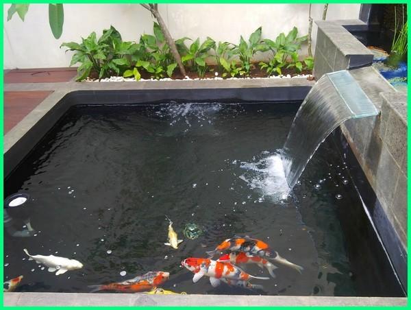 apakah kolam koi perlu aerator, apakah kolam koi perlu di cat, apakah kolam koi perlu dikuras, apa saja isi filter kolam koi, mengapa kolam koi berbusa, kenapa kolam koi berbusa, kenapa air kolam ikan koi berbusa, kenapa kolam ikan koi cepat berlumut, kenapa kolam ikan koi bau amis