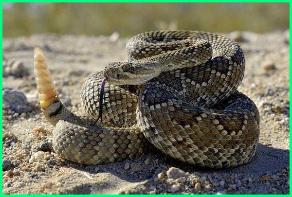 berbagai macam reptil macam macam ordo reptil macam binatang reptil jenis reptil berbahaya jenis reptil berbisa jenis reptil dan penjelasannya