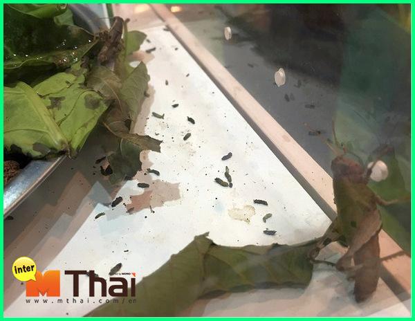 nama hewan bahasa thailand