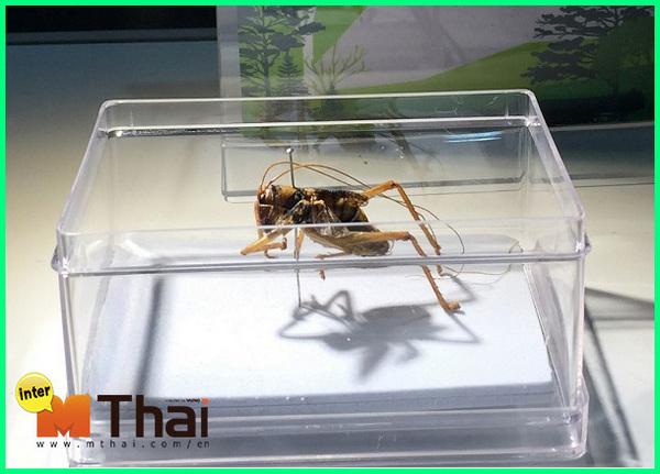 hewan khas thailand, hewan endemik thailand, hewan endemik thailand adalah, hewan asli thailand, hewan endemik di thailand