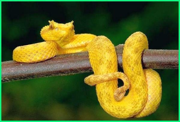 gambar reptil dan namanya,contoh gambar reptil, hewan reptil dan gambarnya, gambar fauna reptil, gambar jenis reptil, gambar kelompok reptil