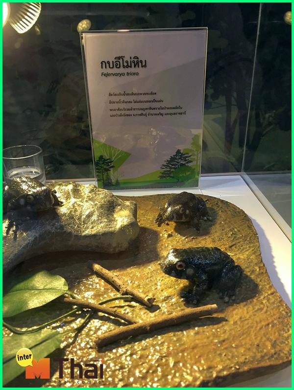 hewan langka dari thailand, hewan khas dari thailand, hewan hewan thailand, gambar hewan khas thailand, tumbuhan dan hewan khas thailand