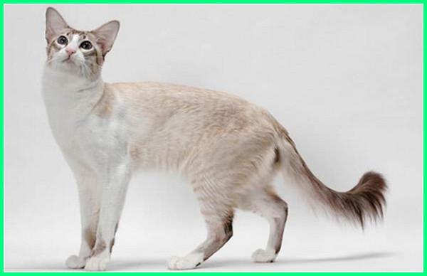 gambar kucing kecil, gambar kucing kecil lucu, gambar kucing kecil imut, kucing jenis kecil, kucing kecil lucu menggemaskan, kucing kecil lucu dan menggemaskan