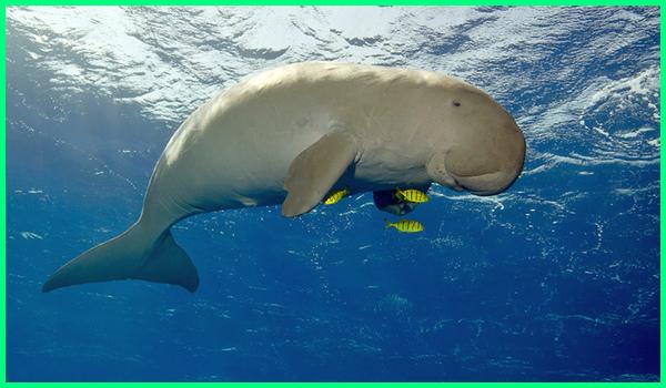 mamalia laut, ,mamalia air, mamalia bernafas dengan, mamalia adalah hewan yang, mamalia air bernapas dengan, mamalia air yang bernapas dengan paru-paru adalah, mamalia air seperti lumba-lumba sesekali melompat ke permukaan untuk, mamalia air akan menghirup oksigen saat, mamalia contohnya, hewan mamalia di laut, mamalia haiwan