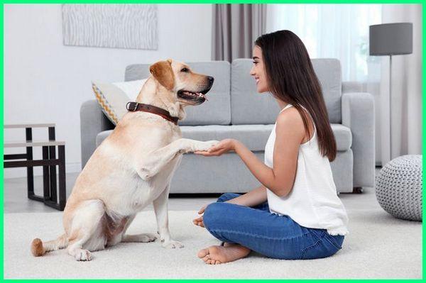 apa manfaat anjing bagi manusia, apa manfaat anjing bagi lingkungan rumah, apa manfaat anjing bagi lingkungan, contoh manfaat anjing, manfaat hewan anjing bagi lingkungan rumah, manfaat hewan anjing bagi manusia, manfaat anjing bagi lingkungan, manfaat memelihara anjing dirumah
