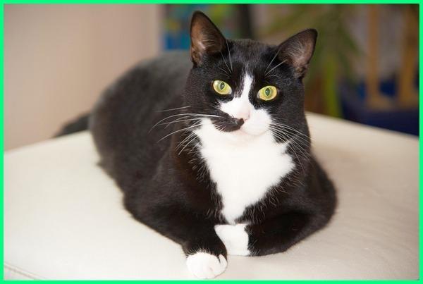 Nama Kucing Betina Sangat Penting Agar Bisa Lebih Dekat Dan Sayang Dunia Fauna Hewan Binatang Tumbuhan