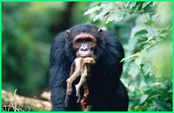 Omnivora Hewan Pemakan Segala Dan Contohnya Dunia Fauna Hewan Binatang Tumbuhan