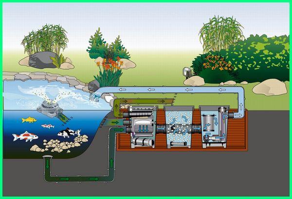 peralatan kolam koi, peralatan filter kolam koi, peralatan untuk kolam ikan koi, peralatan kolam ikan koi, alat kolam ikan koi, toko peralatan kolam ikan koi