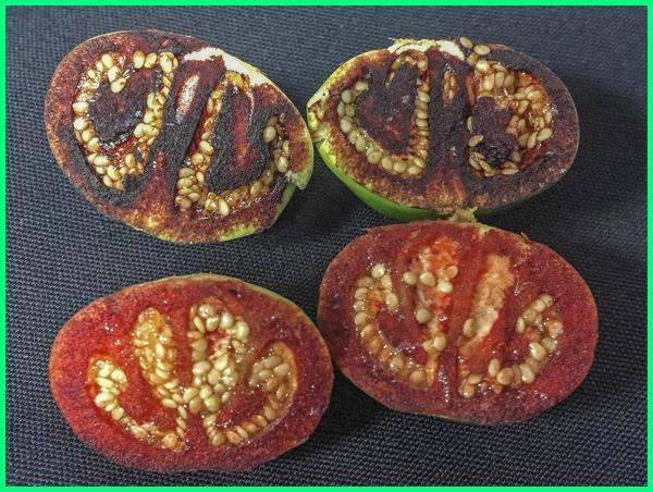 tumbuhan jenis baru, tumbuhan yang baru muncul, penemuan tumbuhan baru, spesies tumbuhan baru, tanaman jenis baru, tanaman yang baru ditemukan