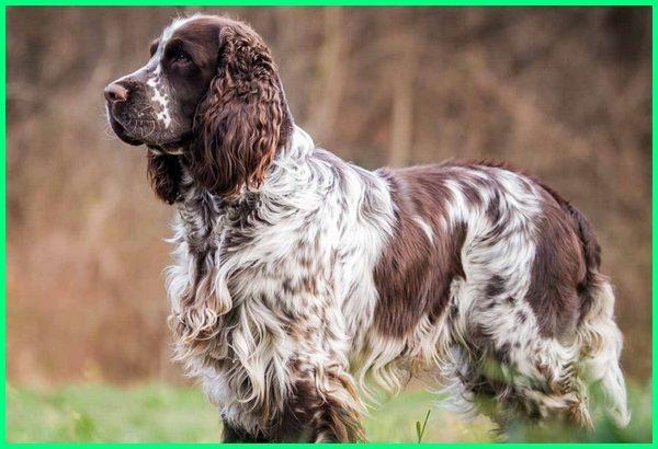 ramuan anjing pemburu, anjing pemburu serigala, anjing pemburu super, jenis anjing pemburu serigala, anjing pemburu trenggiling, anjing pemburu terganas, anjing pemburu ular, anjing untuk pemburu, anjing pemburu wallpaper, www.anjing pemburu