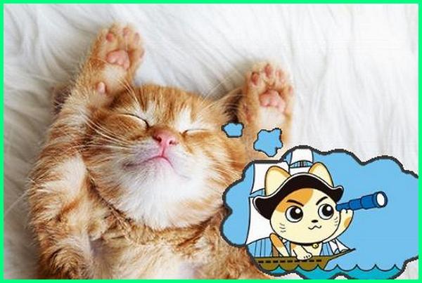 apa arti mimpi kucing, apa maksud mimpi kucing, maksud mimpi kucing, mimpi kucing berapa nomornya, makna mimpi kucing