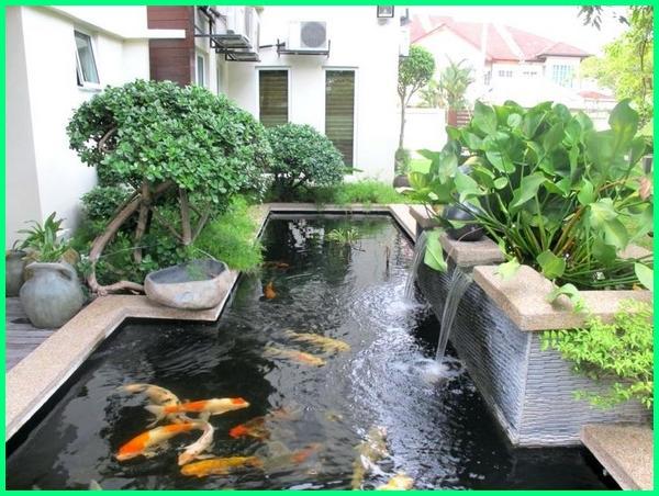 contoh kolam ikan hias sederhana, kolam ikan hias depan rumah minimalis, ekosistem kolam ikan hias, foto kolam ikan hias sederhana, gambar kolam ikan hias di depan rumah, gambar kolam ikan hias sederhana, gambar kolam ikan hias di taman