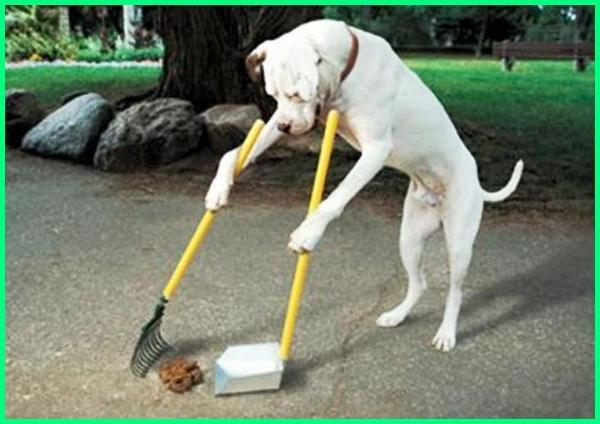 dampak hewan peliharaan bagi lingkungan, dampak hewan peliharaan terhadap lingkungan, dampak hewan peliharaan dan lingkungan, dampak memelihara hewan peliharaan, dampak terhadap hewan peliharaan, dampak kewajiban hewan peliharaan, dampak negatif memelihara hewan peliharaan, dampak kewajiban terhadap hewan peliharaan, apa dampak bagi hewan peliharaan