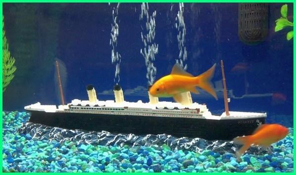 alat gelembung di aquarium, diy gelembung aquarium, filter gelembung aquarium, gambar gelembung aquarium, kreasi gelembung aquarium, kegunaan gelembung aquarium, model gelembung aquarium, memperbaiki gelembung aquarium, fungsi gelembung pada akuarium, gelembung aquarium rusak, aksesoris burukbuk aquarium