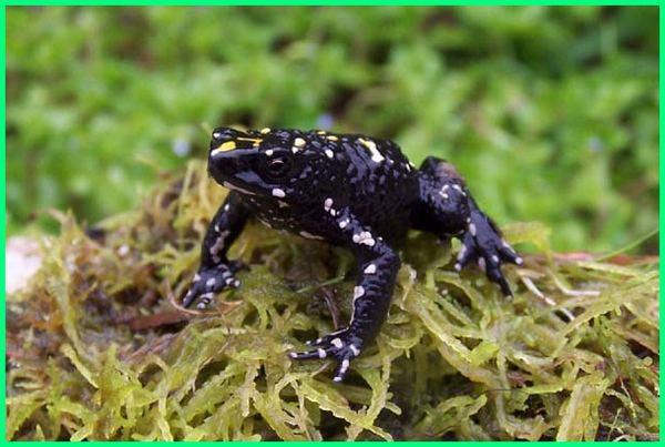 gambar hewan unik di dunia, hewan unik yang hampir punah, hewan hewan unik, hewan hewan unik di dunia, hewan hewan unik dan langka, nama hewan unik di indonesia, jenis hewan unik