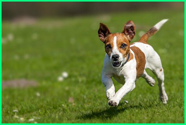 jenis anjing terkenal di dunia, jenis anjing yang ada di dunia, jenis anjing yg ada di dunia, jenis anjing di belahan dunia, berbagai jenis anjing di dunia, jenis anjing di dunia, jenis anjing terbesar di dunia, jenis jenis anjing di dunia, jenis anjing populer di dunia