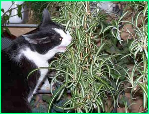 tanaman yang disukai kucing, nama tanaman yang disukai kucing, jenis tanaman yang disukai kucing, tanaman yg disukai kucing, kucing memakan tanaman