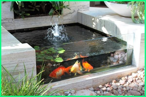 kolam ikan hias kaca, kolam hias ikan mas, desain kolam ikan hias mini, kolam ikan hias natural, desain kolam ikan hias sederhana, membuat kolam ikan hias sendiri
