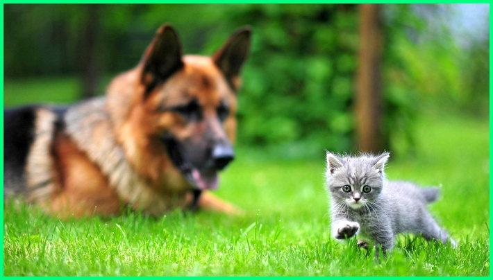 apa perbedaan anjing dan kucing, apa bedanya anjing dan kucing, apa beda anjing sama kucing, apa perbedaan antara kucing dan anjing, apakah perbedaan kucing dan anjing, apa perbedaan kucing dengan anjing, perbedaan kutu anjing dan kucing