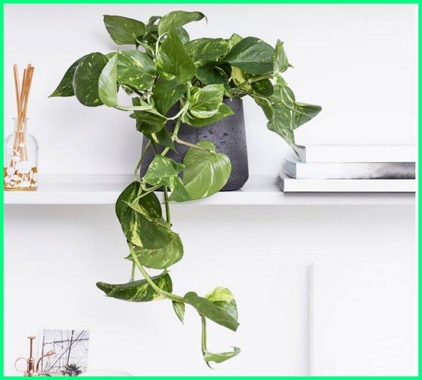tanaman feng shui bagus, tanaman feng shui kantor, tanaman hoki menurut feng shui, tanaman hias sesuai feng shui, tanaman rumah menurut feng shui, feng shui tanaman di dalam rumah, tanaman feng shui baik, tanaman feng shui rumah, feng shui tanaman di belakang rumah