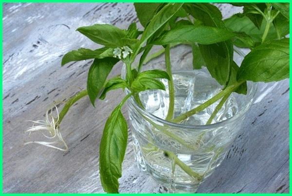 apa saja tanaman yang hidup di air, tanaman apa saja yang bisa hidup di air, tanaman apa saja yang bisa ditanam di air, nama tanaman di air, nama tanaman hidup di air