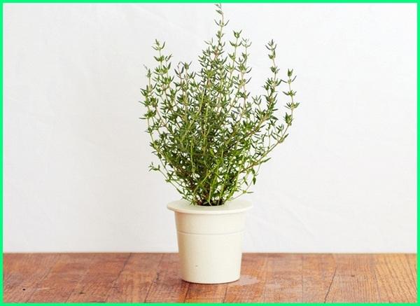 tanaman hias suka air, tanaman hias vas air, tanaman hias wadah air, tanaman hias yang hidup di air, tanaman hias yg bisa tumbuh di air, contoh tanaman hias air