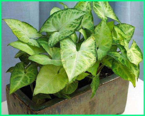 tanaman hias gantung media air, tanaman hias dalam rumah media air, tanaman hias yang menggunakan media air, jenis tanaman hias dengan media air, menanam tanaman hias dengan media air, cara menanam tanaman hias dengan media air, tanaman hias dengan media air